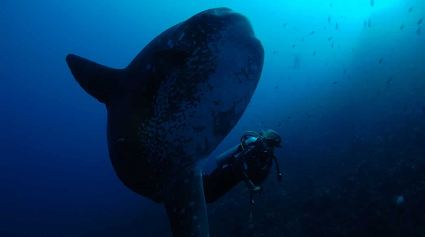 villa-bali-candidasa-diving-moonfish